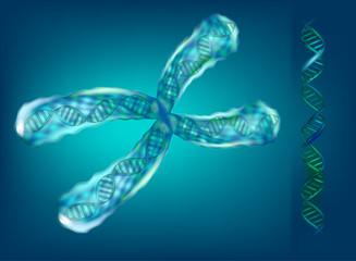 3D illustration of chromosomes. Genetics.