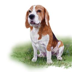 Adorable beagle sitting on yard