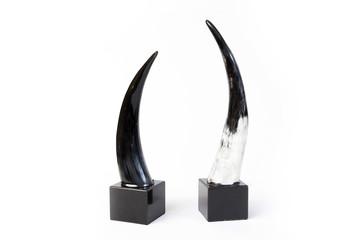 horn for decoration on white back ground