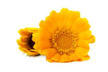 Flowers  Calendula (Calendula officinalis, garden marigold, English marigold) .  Medicinal herb. Selective focus