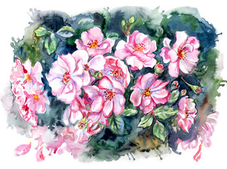 Flowering briar on the bush, watercolor illustration in an expressive manner.