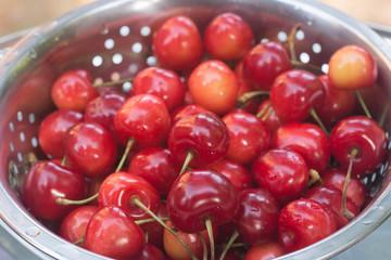 bird cherry berries  in colander