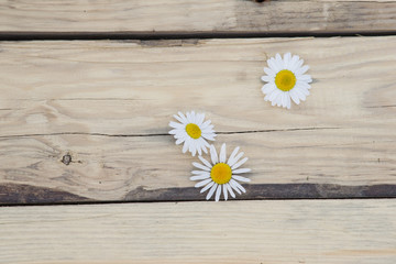 Obraz Kwiaty rumianku na drewnianych deskach - fototapety do salonu