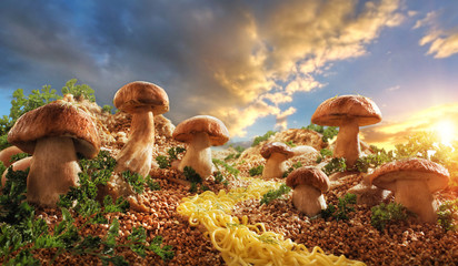 Грибы на поляне из гречки mushrooms in the glade of buckwheat