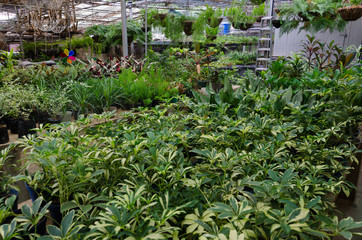 Interior view of the greenhouse with tropical plants in pots