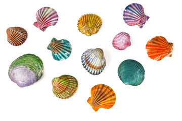 decorative painted sea shells isolated on white