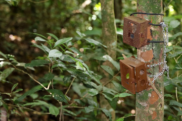 Old Camera trap box or case attaches to a tree in the rain forest
