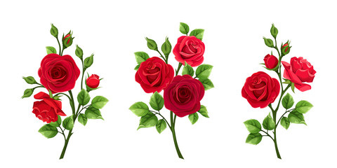 Vector set of branches of red roses isolated on a white background. Fototapete