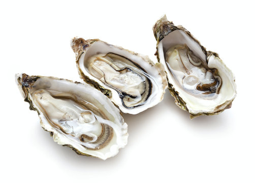 set of oysters isolated on white background
