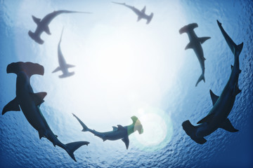 School of hammerhead sharks circling from above the ocean depths. 3d rendering