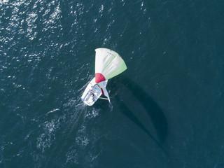 海を走るヨットは風を受け大きく帆が膨らんでいる