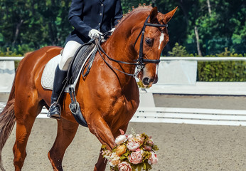 Dressage horse and rider. Sorrel horse portrait during equestrian sport competition. Advanced dressage test. Copy space for your text.