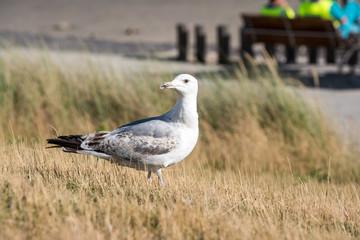 An Bbeautiful seabird