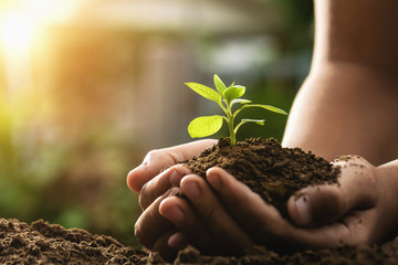 Poster Planten hand holding plant growing and sunset. concept eco and green world