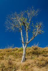 A tree against a blue sky on the mountains