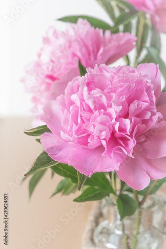 Rosa Pfingstrosen Stock Photo And Royalty Free Images On Fotolia