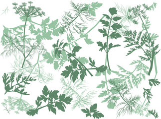 green dill and parsley background illustration