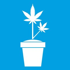 Hemp in pot icon white isolated on blue background vector illustration