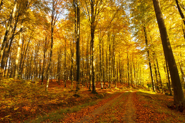 Road in a colorful, autumn forest.Pomerania ,Poland