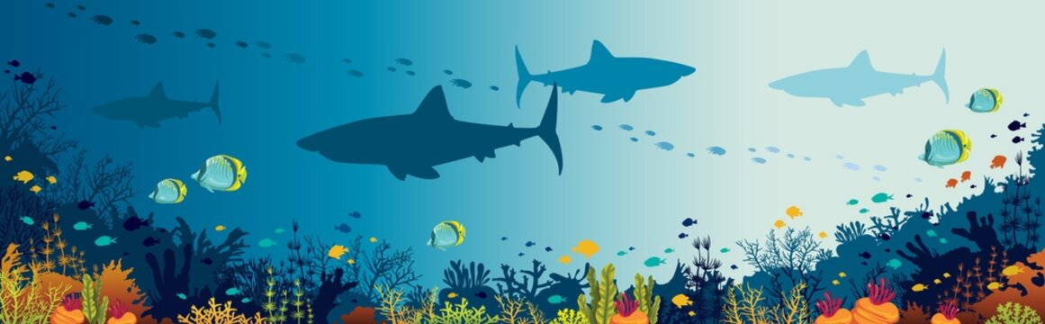 Sharks, coral reef, underwater sea and fishes.
