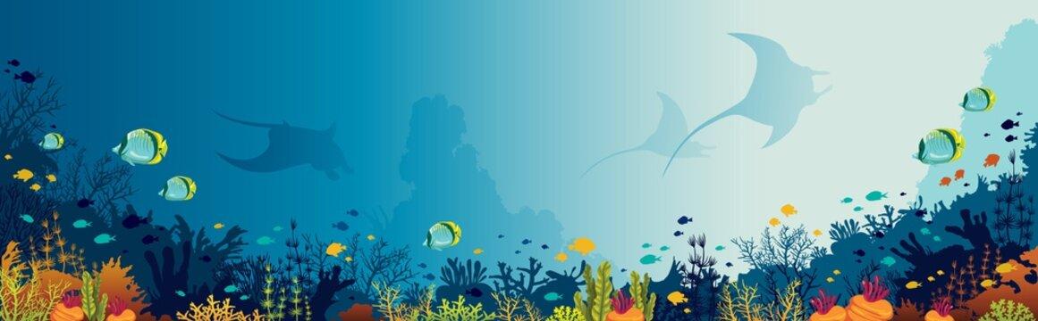 Mantas, coral reef, underwater sea.
