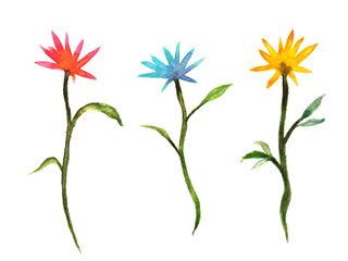 watercolor painting illustration flower set. isolated on a white background . hand drawn