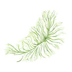 watercolor green algae