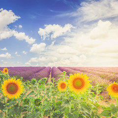 Acrylic Prints Village Sunflower and Lavender field