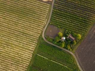 Wall Mural - planted agricultural fields with a road and a house, top view
