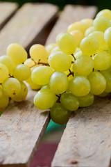 grapes on a light