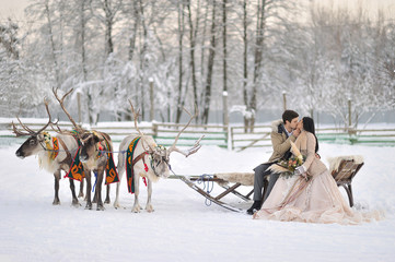 Winter wedding European bridegroom and Asian bride with a harness of reindeer