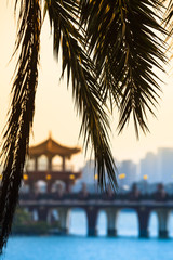 Chinese Palm Leaf View at Twilight / Closeup of palm tree leaf with bridge and asian style pavilion at Lotus lake Kaohsiung, Taiwan