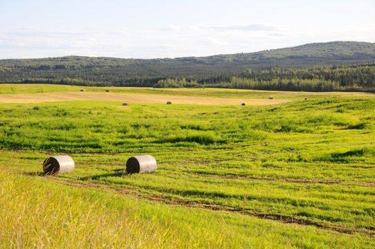 Pasture roll in grass field in Fairbanks, Alaska