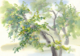 apple tree watercolor background