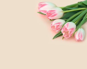 Bouquet of pink tulips on beige background