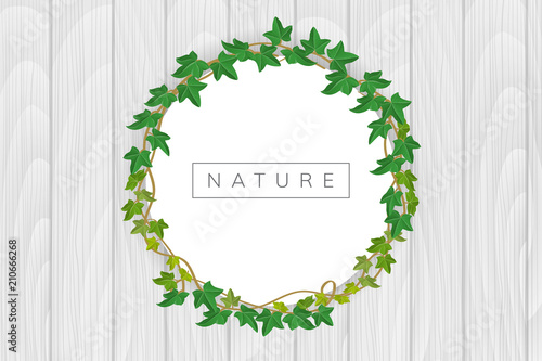 round frame with green ivy on white wood texture background vector