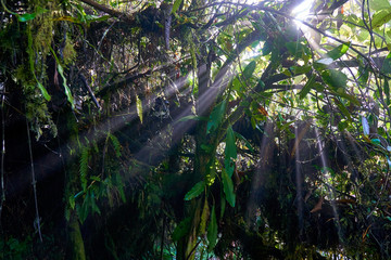 Sun rays in the mossy forest