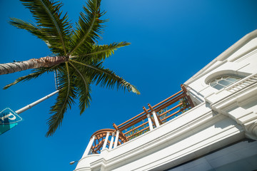 Palm tree and elegant building in world famous Rodeo Drive