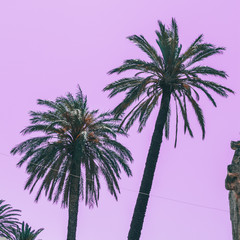 palm trees on pink sky background. minimal and surreal. summer vacation