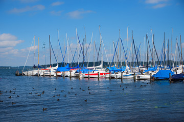 Schaukelnde bunte Segelboote am Chiemsee, Blässhühner im Wasser.