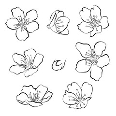 Set of cherry blossoms. Collection of flowers of sakura. Black and white drawing of spring flowers. Linear Art. Tattoo.