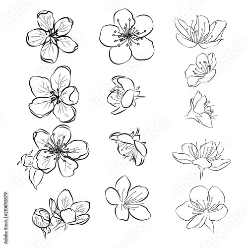 """Cherry Blossom In Black And White Tattoos With My: """"Set Of Cherry Blossoms. Collection Of Flowers Of Sakura"""