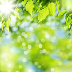 Bright summer natural background with fresh green leaves