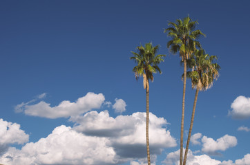 Palm trees, clouds, and blue sky background.