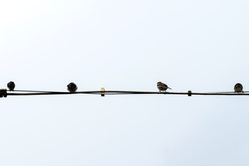 Birds on a power line in Germany
