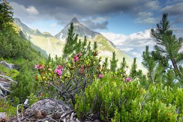 Fototapete - Alpenrosen mit Berggipfel im Hintergrund