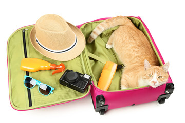 Ginger cat lying in pink suitcase on white background