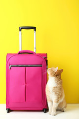 Pink suitcase and ginger cat on yellow background