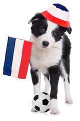 Border Collie Welpe als französischer Fußballfan