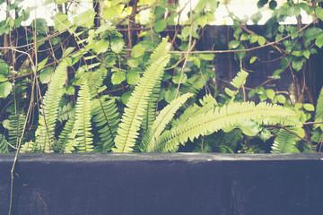 tropical plant leaves, vintage filter image
